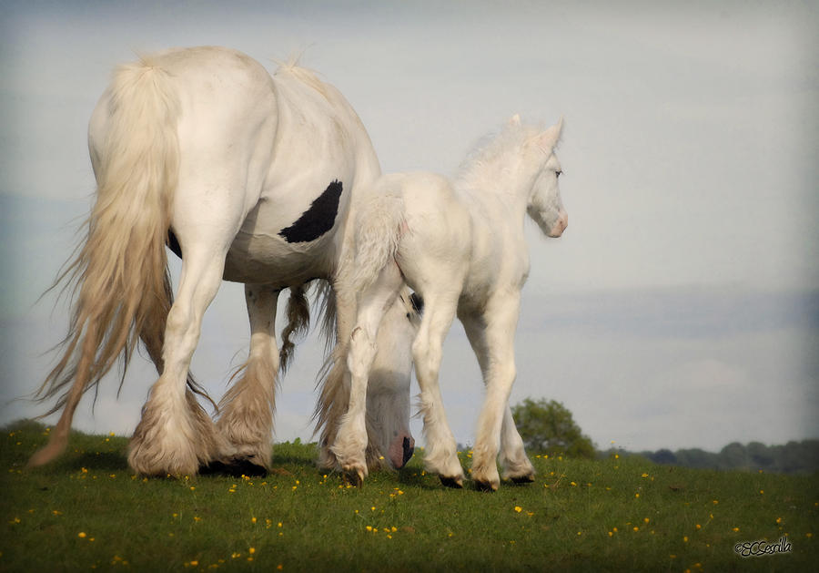 Gypsy Vanner Photograph - Mare And Foal by Elizabeth Sescilla