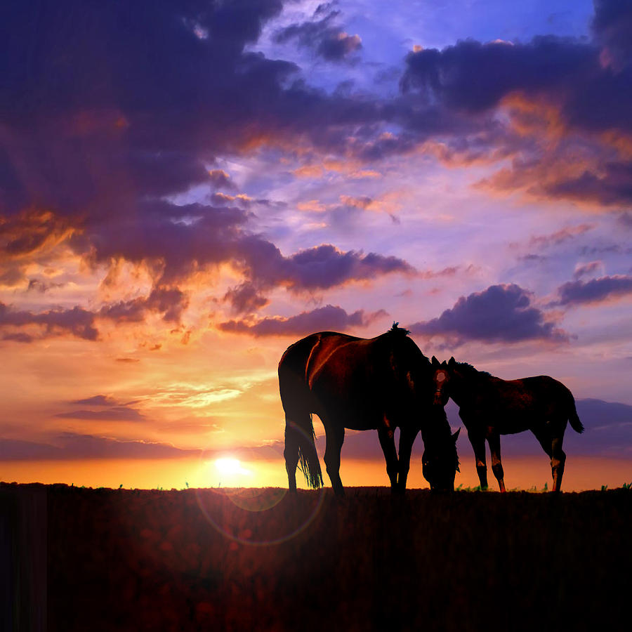 Horses Photograph - Mare And Foal by Rod Seel