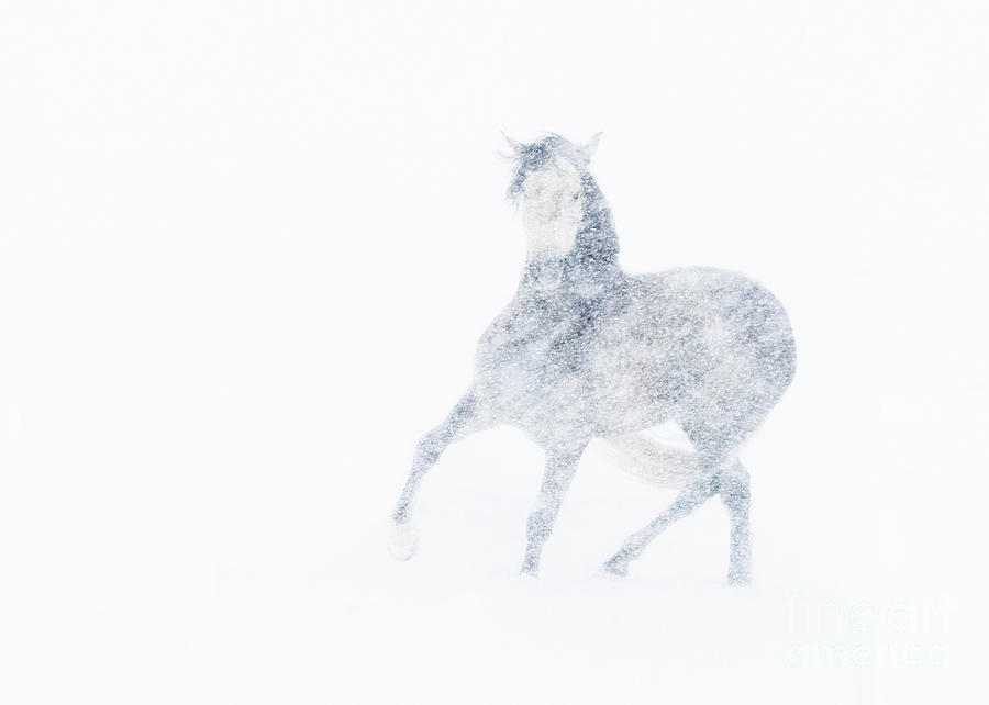 Mare Photograph - Mare In A Blizzard I by Carol Walker