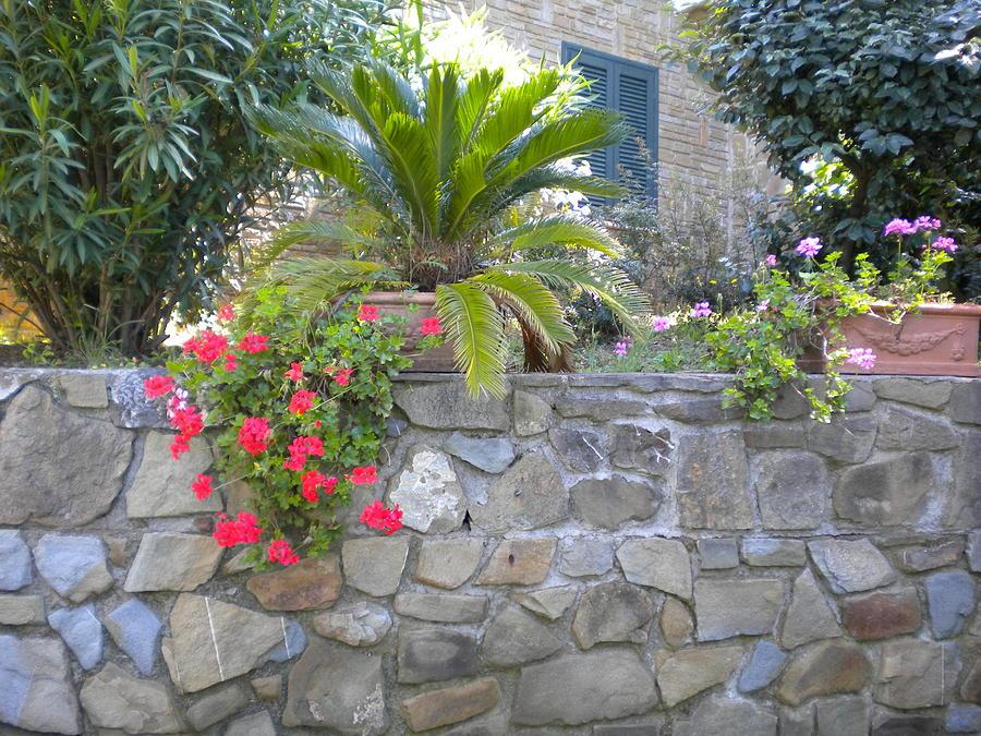 Gardern Photograph - Maremma Garden by Nancy Ferrier