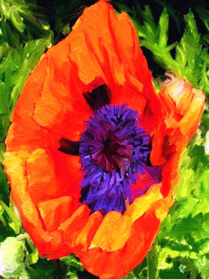 Poppies Digital Art - Margos Poppy by Randy Sprout