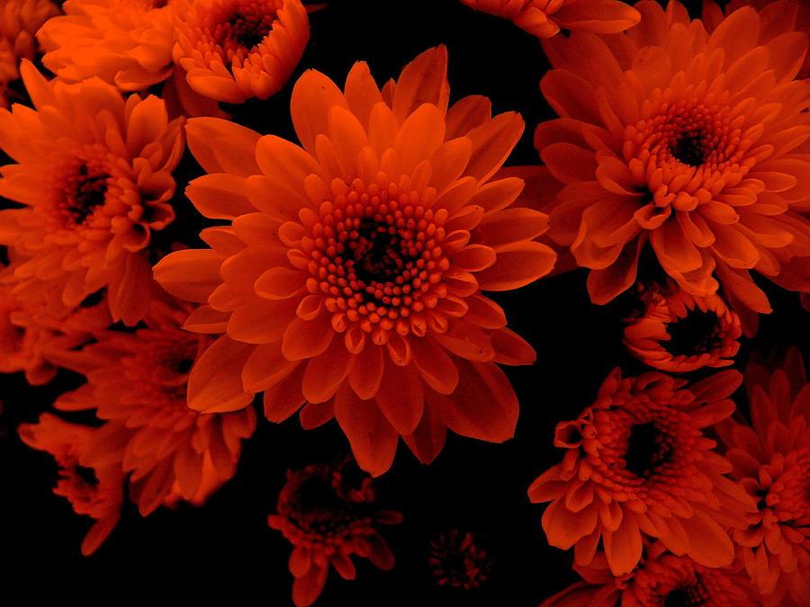 Marigolds Photograph - Marigolds In Orange Light by Vineta Marinovic