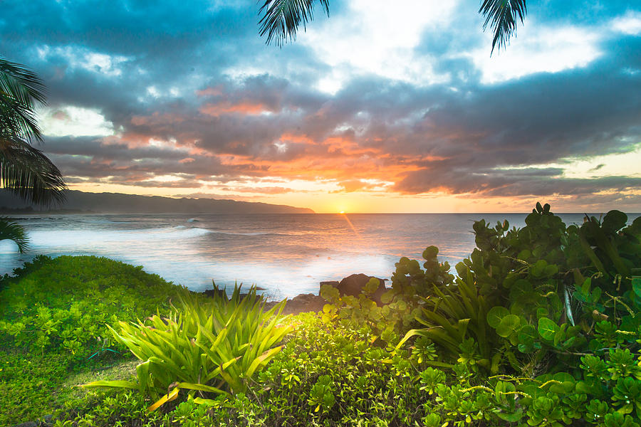 Marijuana Sunset Hawaii by Leonardo Dale