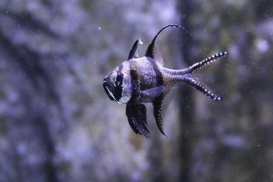 Marine Photograph - Marine Fish by Kyle Hillman