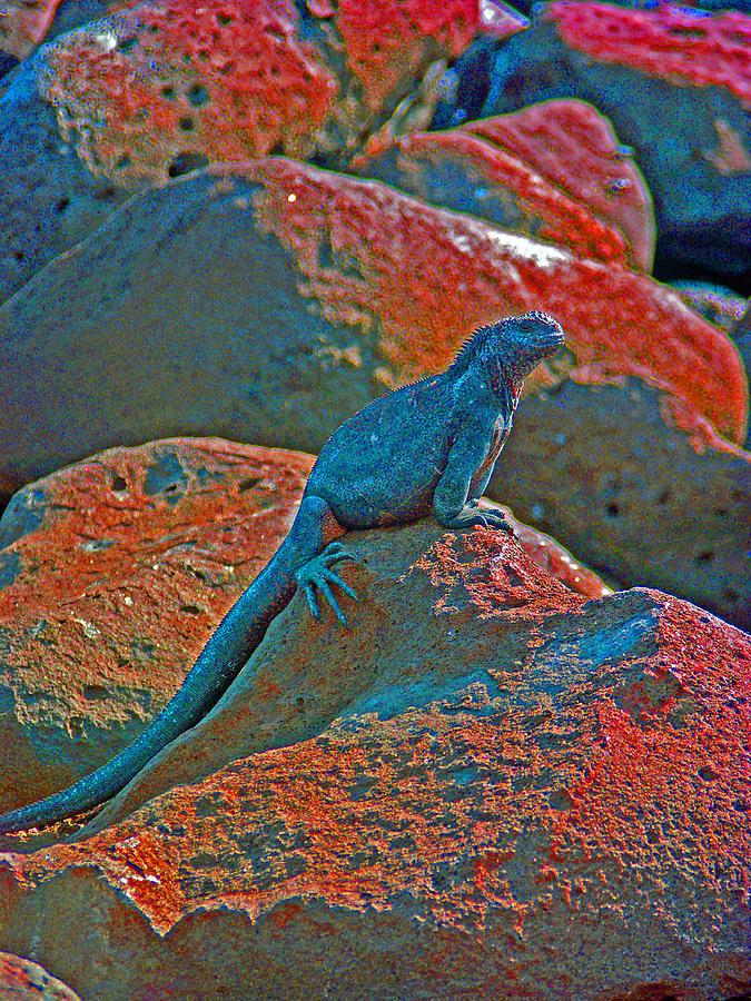 Nature Photograph - Marine Iguana by Ladonna Idell