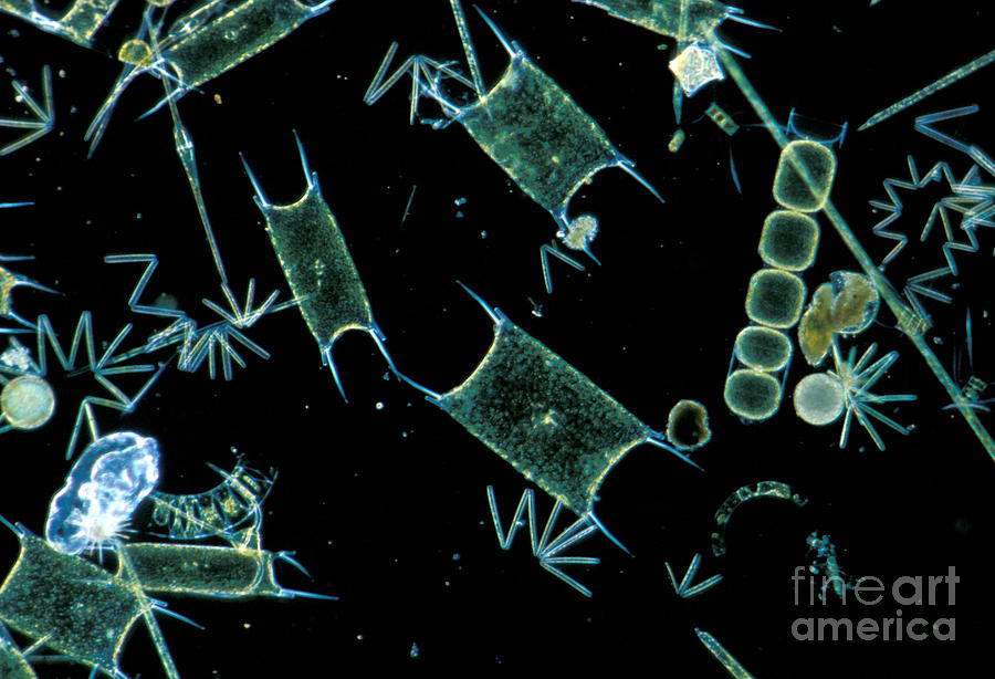 plankton and diatoms Fish, whales, dolphins, crabs, seabirds, and just about everything else that makes a living in or off of the oceans owe their existence to phytoplankton, one-celled plants that live at the ocean surface scientists seek to learn more about these one-celled wonders, which even influence global climate.