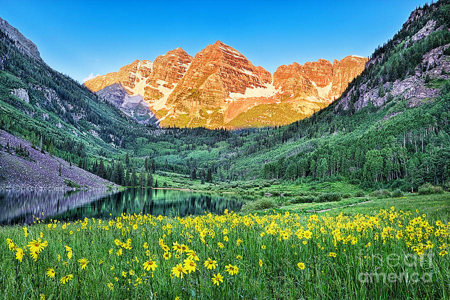 Maroon Bells With Summer Flowers Colorado