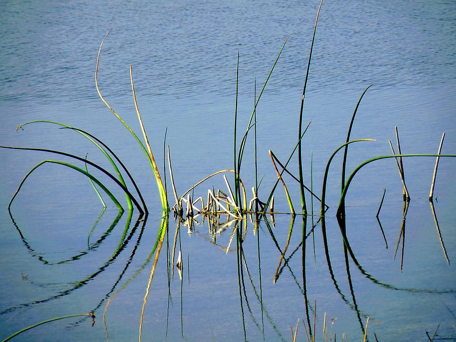 Marsh Photograph - Marsh Design by Rosalie Scanlon