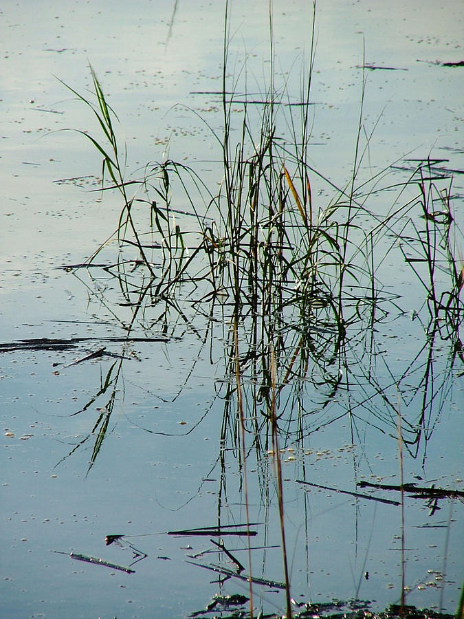 Waterscape Photograph - Marsh Grass by Donna Thomas