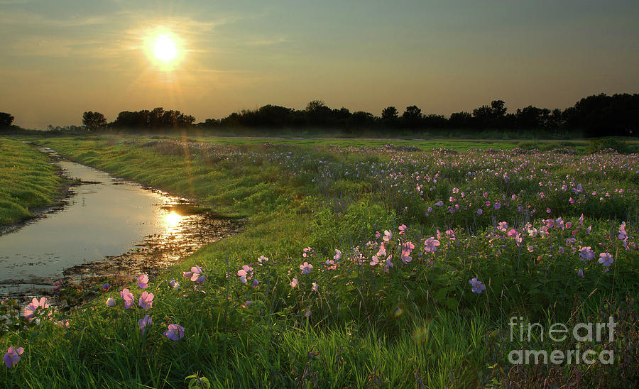 Marsh Mallows by Charles Owens