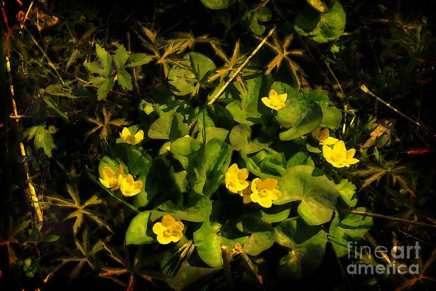 Marigold Digital Art - Marsh Marigolds by David Blank