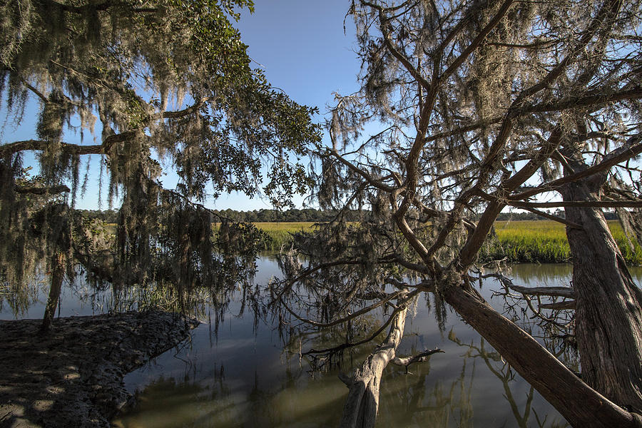 Swamp Photograph - Marsh by Mike Dunn