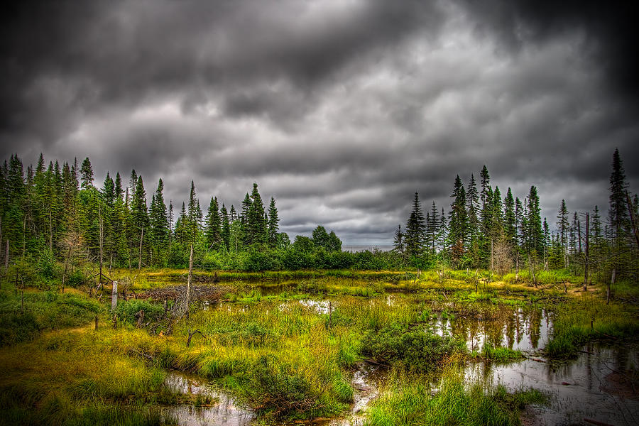 Marsh Photograph - Marsh Near The Lake by Michel Filion