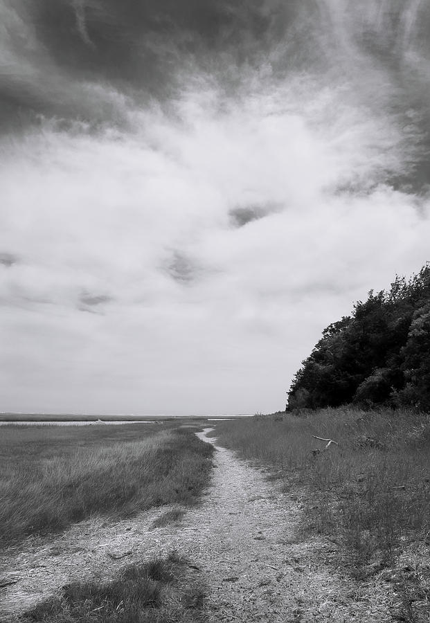 Marsh Pathway by Michael Friedman