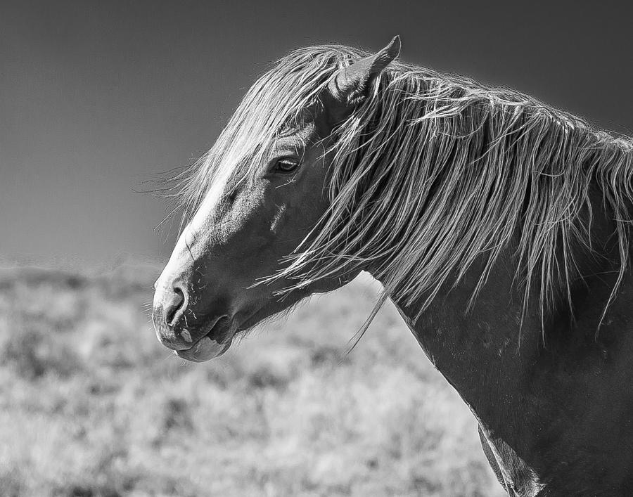 Horse Photograph - Marshall by Joe Hudspeth
