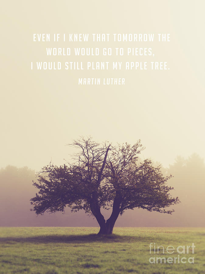 Quote Photograph - Martin Luther Apple Tree Quote by Edward Fielding