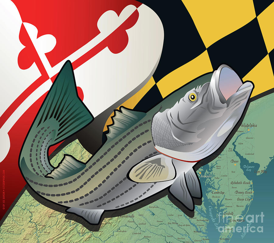 Rockfish Digital Art - Maryland Rockfish by Joe Barsin