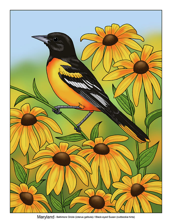 Bird Painting - Maryland State Bird Oriole And Daisy Flower by Crista Forest