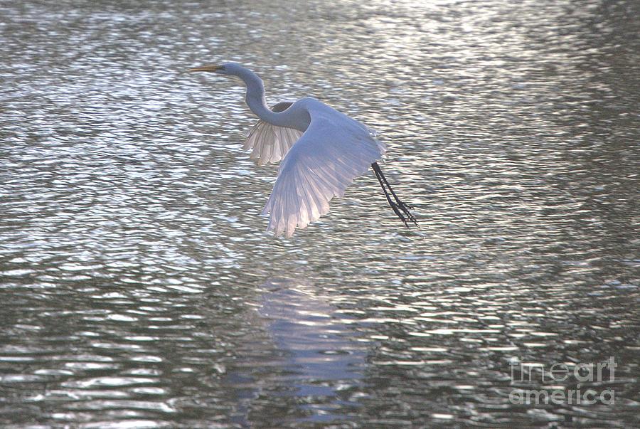Heron Photograph - Master Of Flight by Michael Redmond