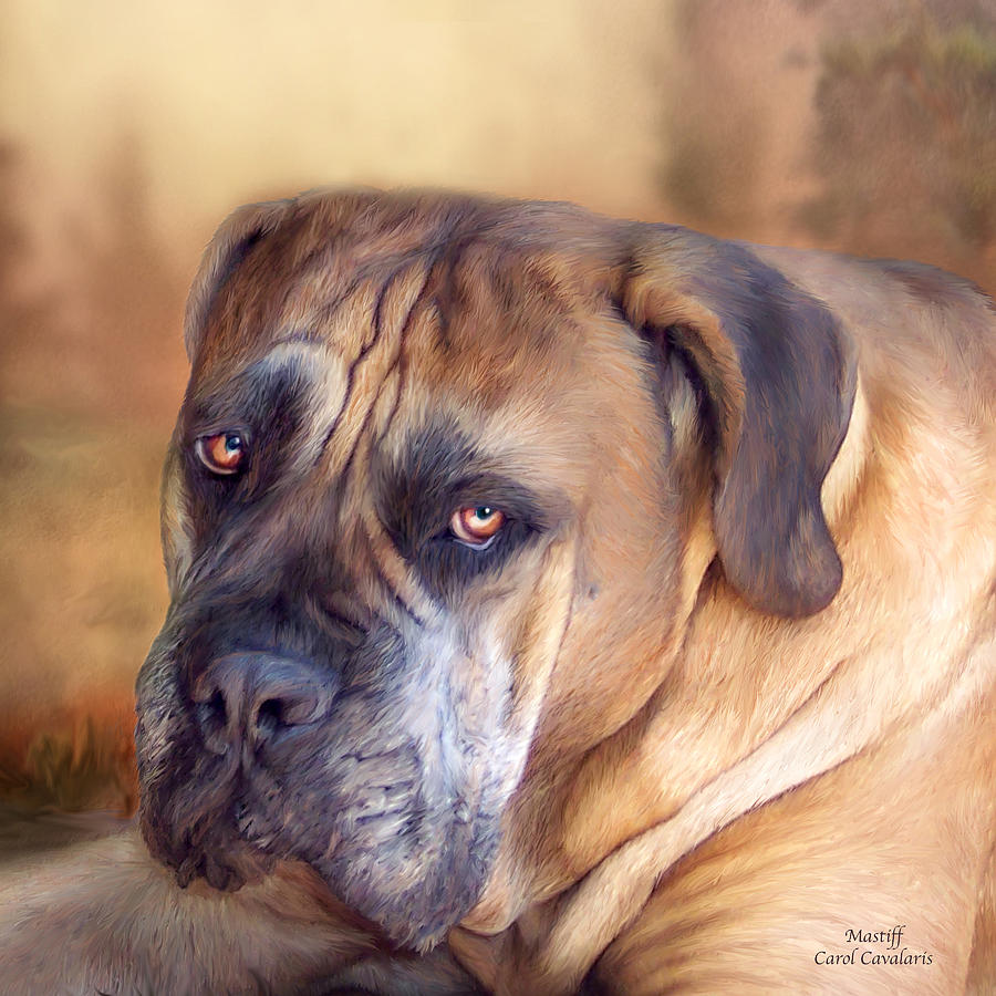Mastiff Mixed Media - Mastiff Portrait by Carol Cavalaris