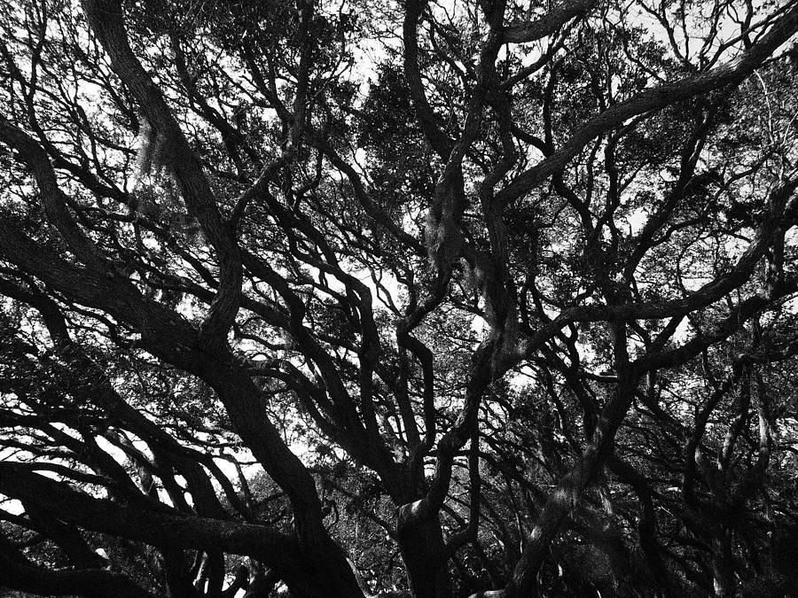 Matanzas Oaks 2 Photograph by Cory Robertson