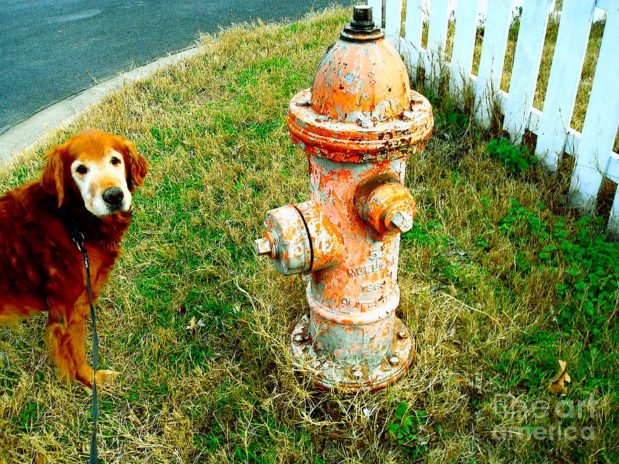 Dog Photograph - Matching Dog And Fire Hydrant by Chuck Taylor