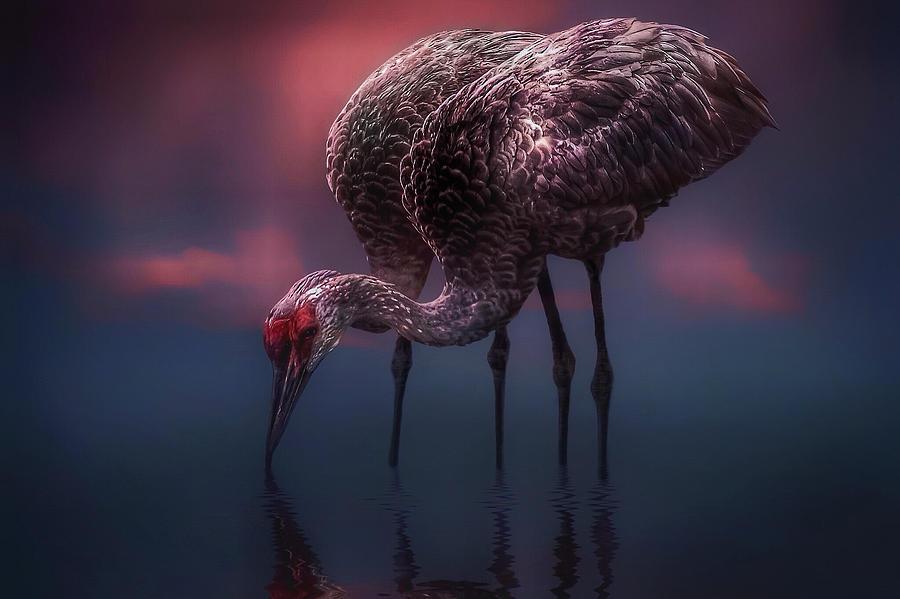 Birds Photograph - Mates by Brenda Wilcox aka Wildeyed n Wicked