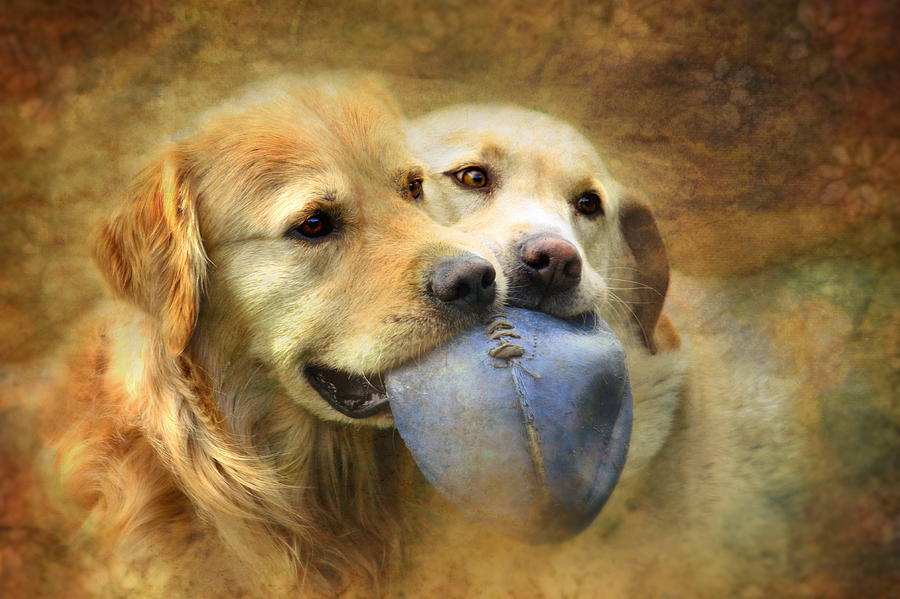 Dog Photograph - Mates by Trudi Simmonds