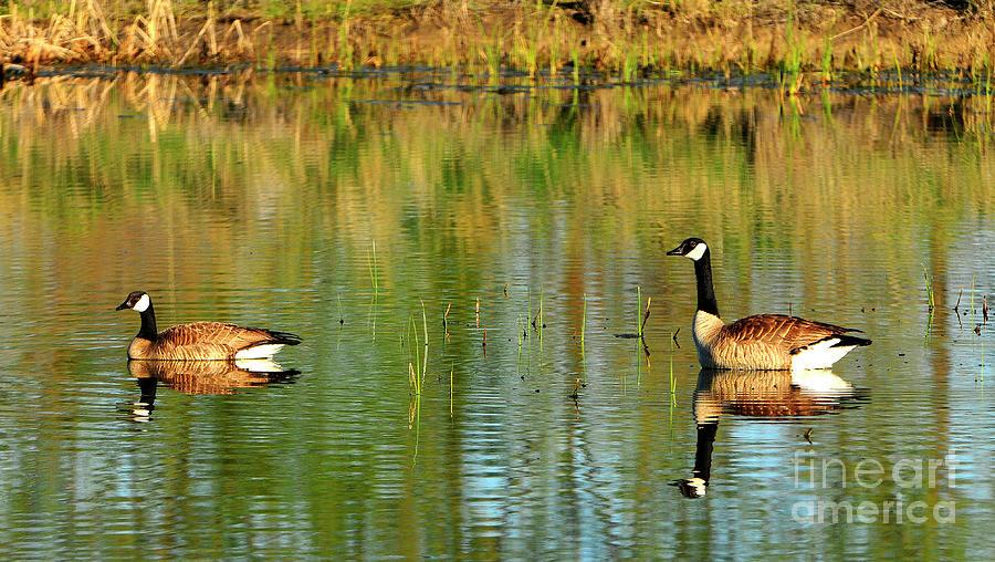 Bird Photograph - Mating Pair by Dennis Hammer