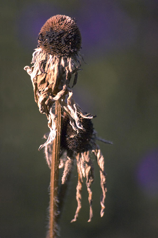 Flowers Photograph - Matter Of Time by Ross Powell