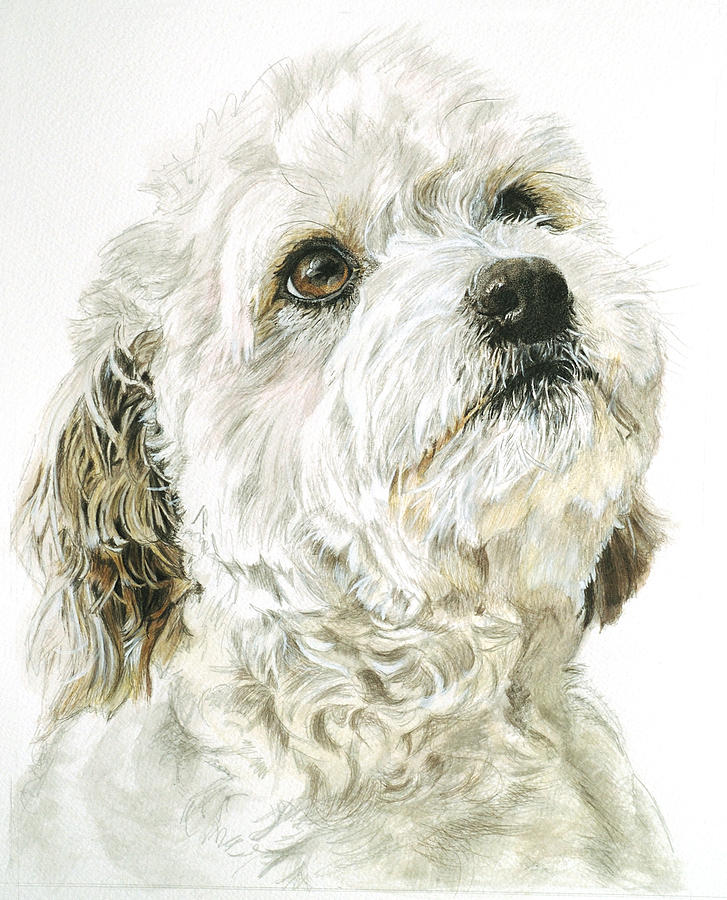 Pet Portrait Drawing - Mattie by Tricia Kittredge