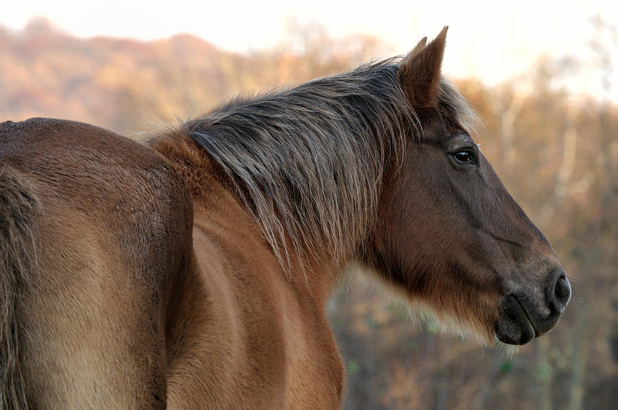 Horse Photograph - Maude in Thought by Don Schroder