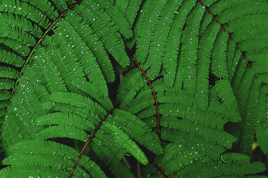 Maui County Photograph - Maui Forest by Luca Bravo