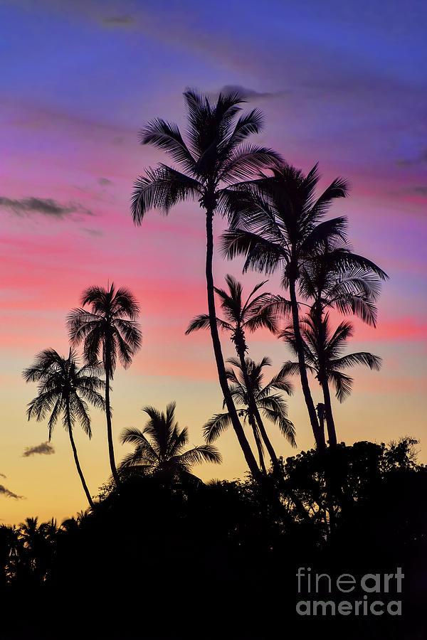 Maui Palm Tree Silhouettes Photograph