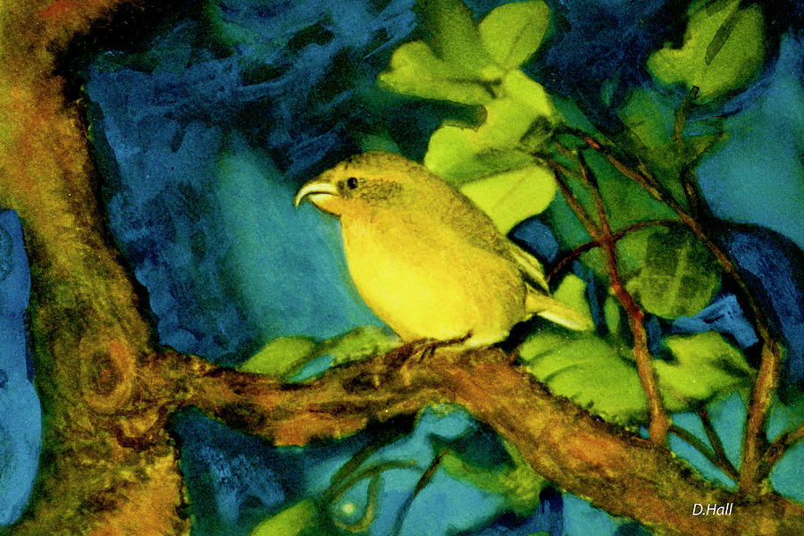 Prints Painting - Maui Parrot Bill Bird  #282 by Donald k Hall