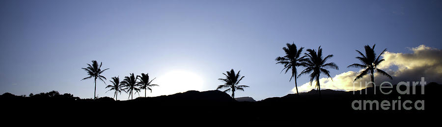 Black Photograph - Maui Sunset Palm Tree Silhouettes by Denis Dore