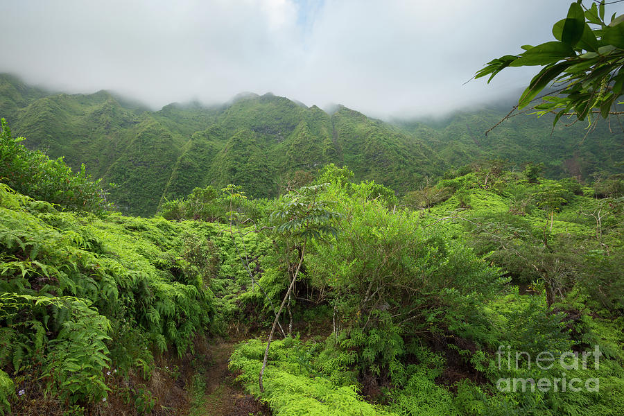 Maunawili Demonstration Trail by Charmian Vistaunet