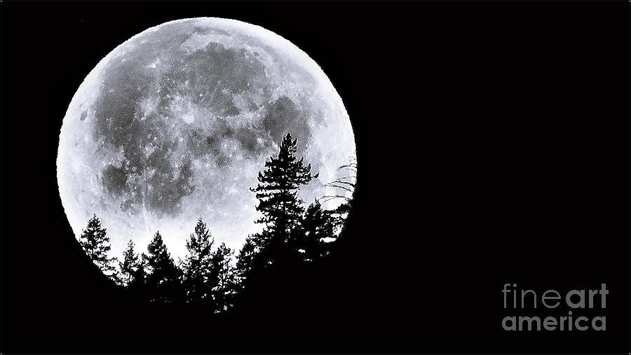 May 4 Moon Set by Julia Hassett