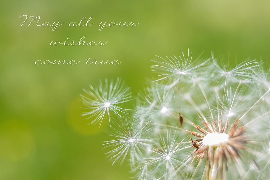May All Your Wishes Come True Dandelion Photograph By