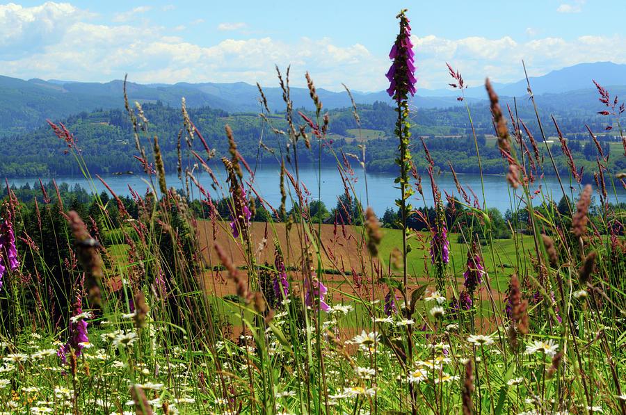 Mayfield Wildflowers by Tikvah's Hope