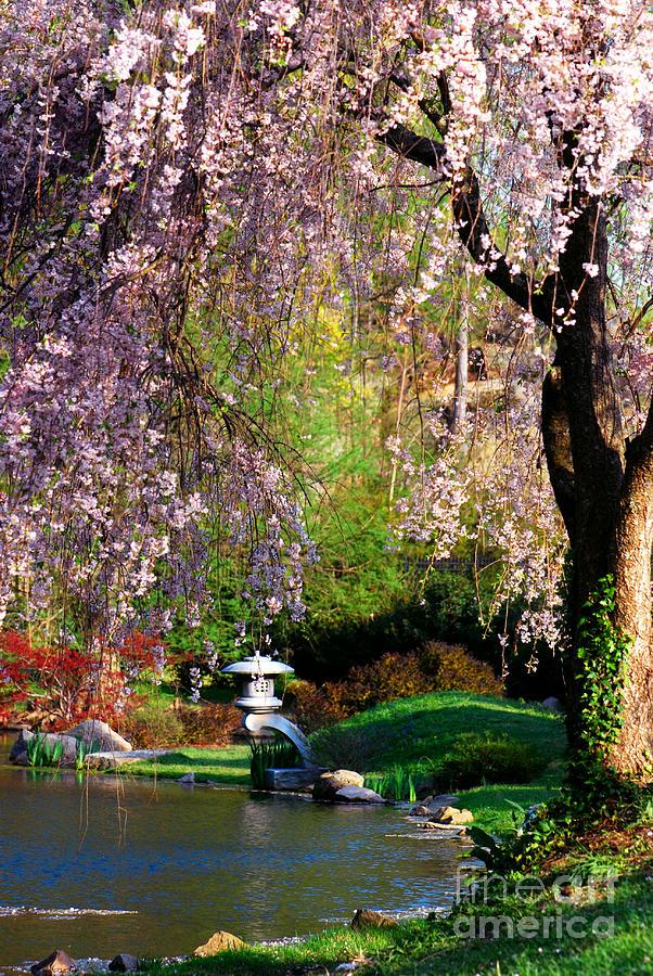 Maymont's Japanese Garden by Terri Creasy