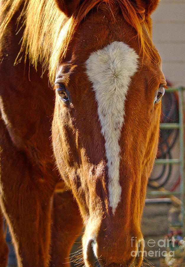 McCool, Grandson of Secretariat by Cindy Schneider