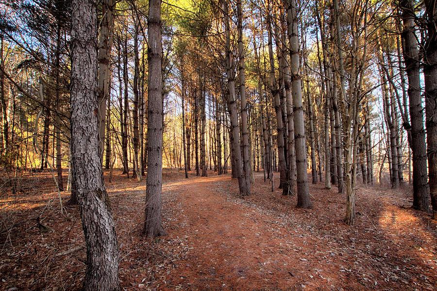 Woods Photograph - Mcdade Vi by Dawn J Benko