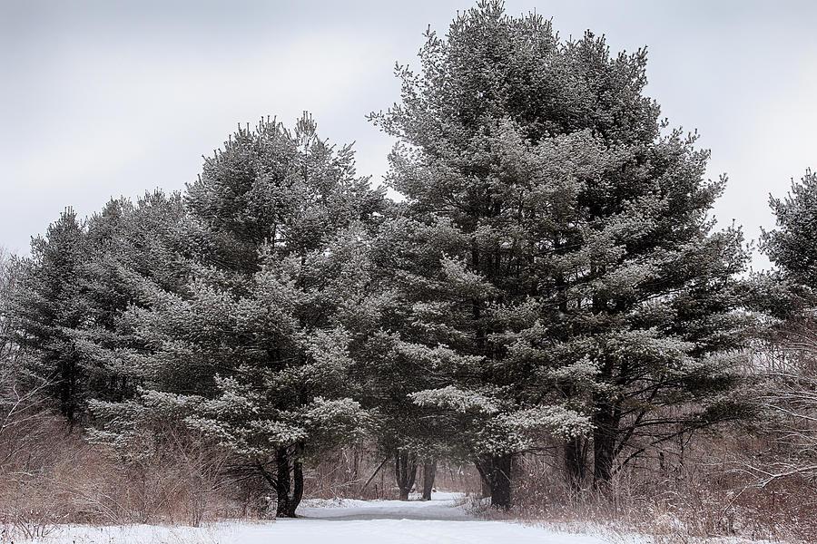 Woods Photograph - Mcdade Viii by Dawn J Benko