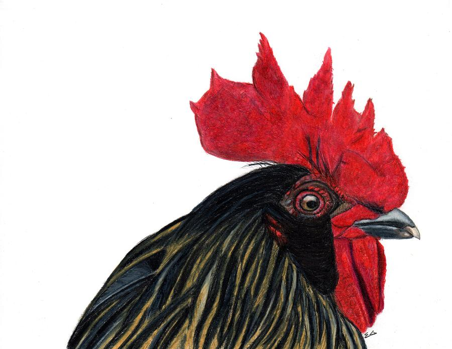 Rooster Drawing - Mcnugget by Ekta Gupta