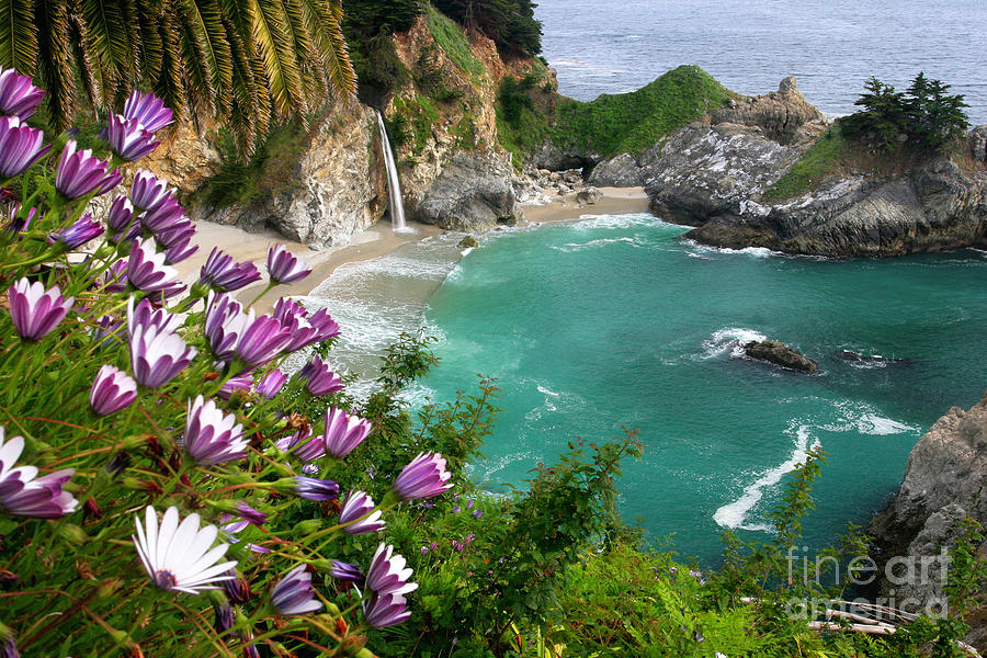 Mcway Cove Photograph - Mcway Falls by Buck Forester