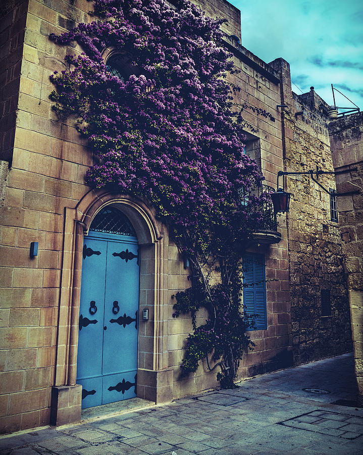 Mdina Flowers by Nisah Cheatham
