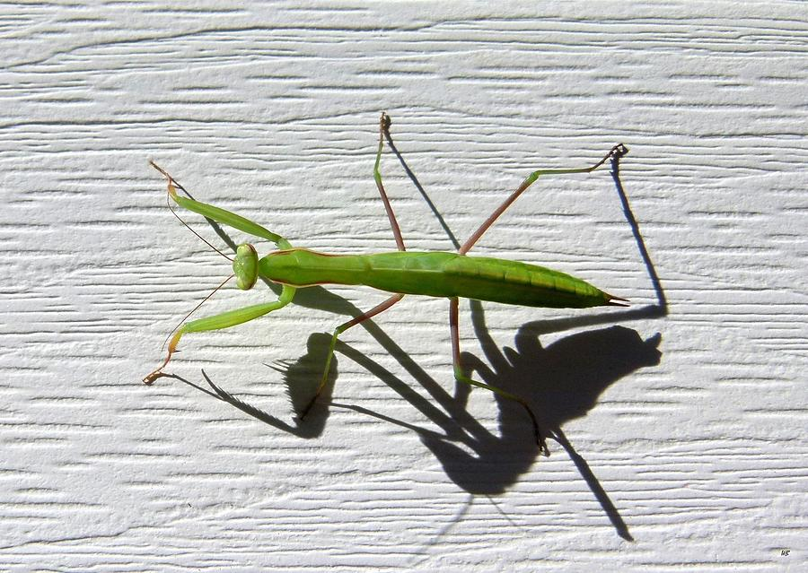 Mantis Photograph - Me And My Shadow by Will Borden