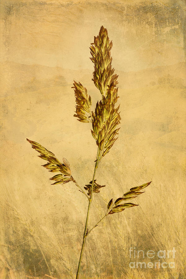 Nature Photograph - Meadow Grass by John Edwards