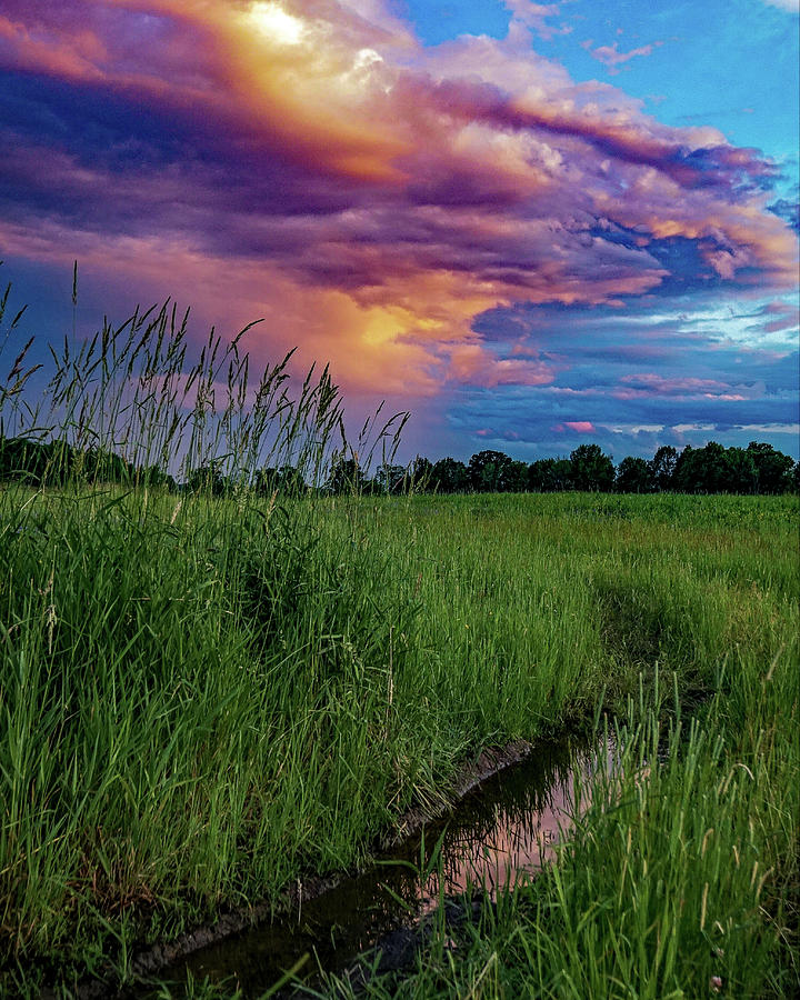 Meadow Lark Photograph by Kendall McKernon